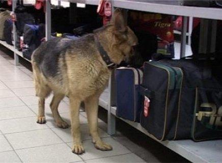 كلاب العثور على القنابل