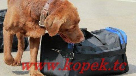 كلاب كشف القنابل والبحث عن المواد المتفجرة