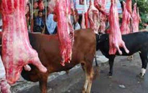 توريد جميع انواع اللحوم البلدى الممتازة الطازجة