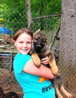صور German Shepherd puppies for you.	 1