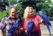Talking Female Hyacinth Macaw Parrot2