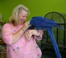 Hand Tamed Hyacinth Macaw Parrot for Adoption