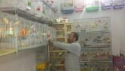 يقين الجنان لبيع وشراء كافة انواع الطيور والكناريات