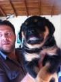 كلب روت ويلر الالماني