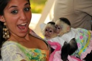 healthy male and female Capuchin Monkeys