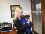 AWESOME YORKIE PUPPIES FOR FREE ADOPTION!!