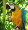 Good looking two blue and gold macaw parrots for free adoption r
